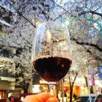 渋谷「富士屋本店ワインバー」で乾杯/満開の桜の下で