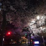【たまプラーザ】2019お花見!『美しが丘第五公園』でのんびり夜桜とコンビニの500円ワイン
