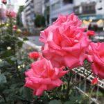 【大塚・立ち飲み】癒し処!『ドラム缶大塚店』お二人の笑顔はバラの花より美しい