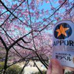 【都筑区・茅ヶ崎公園】河津桜の隠れた名所で公園飲み